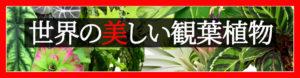 世界の美しい観葉植物