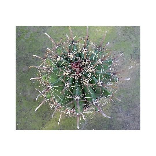 cactuskyolarge